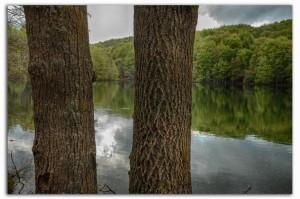 árboles y lago