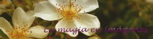 07 Punto libro la magia en imágenes 01