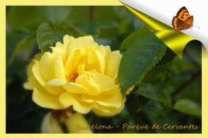 601 Parque cervantes rosa amarilla