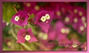 506 Barcelona Montjuich castillo flores lilas