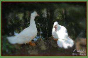 06 Parque laberinto patos