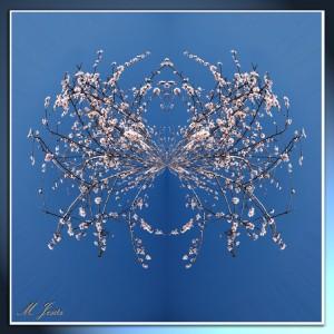 03 Pequeño planeta flor almendro