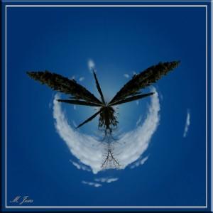 06 Pequeño planeta jardín botánico árboles al cielo