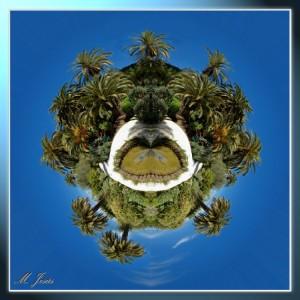 07 Pequeño planeta jardín botánico palmeras