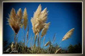 09 Monasterio Budista plantas al cielo