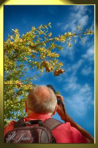 12 Monasterio Budista fotógrafo árbol cielo