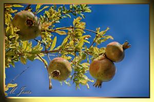 14 Monasterio budista arbol granadas cielo