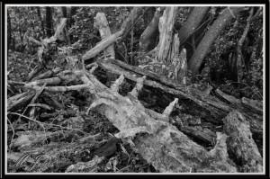 01 Montcau árbol