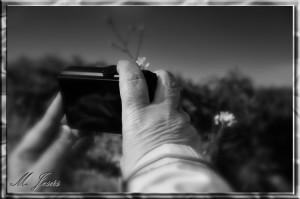 11 Montcau cámara-manos y flor