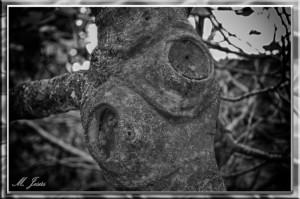 29 Montcau árbol detalle corteza