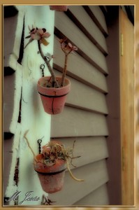 04 Mercantic - Caseta plantas