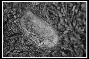 01 Pont de Vilomara - árbol