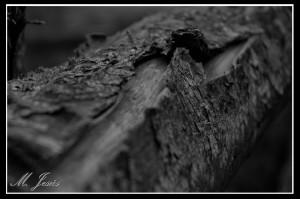 05 Pont de Vilomara - árbol